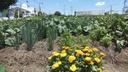 CCJ avalia prioridade a famílias de baixa renda às hortas solidárias