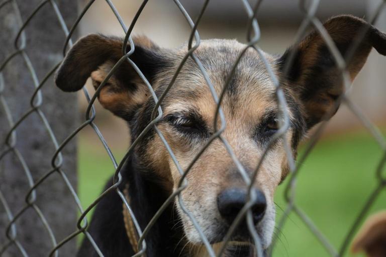 Condomínio que não avisar a polícia de maus-tratos a animais pode ser multado