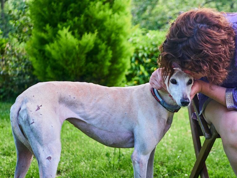 Novo projeto de lei é mais duro contra corrida de cães em Curitiba