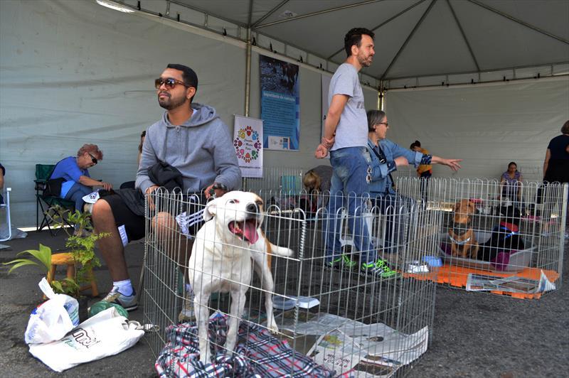 Projeto de lei dispõe sobre doação de animais em Curitiba